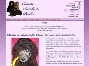 screen shot of Cantope Standard Poodles\' new responsive web site